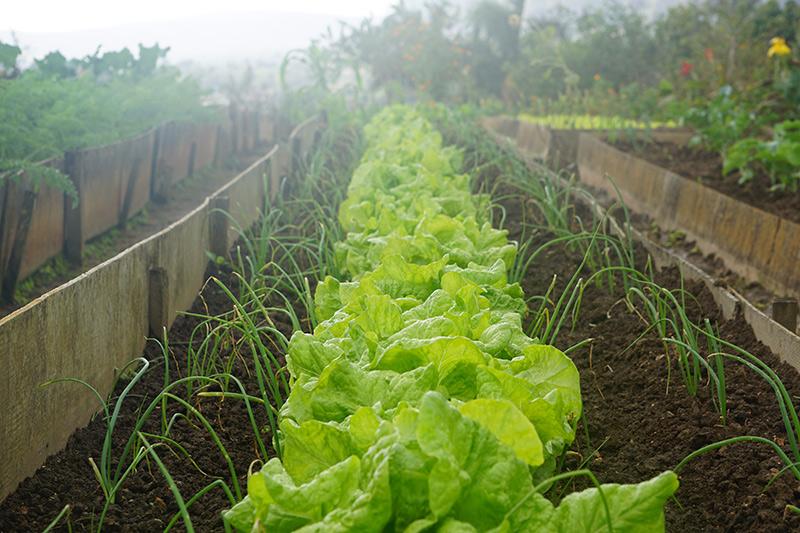 Nuestra propia granja en Breathe